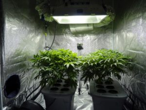 What are the most popular & best grow tent sizes?